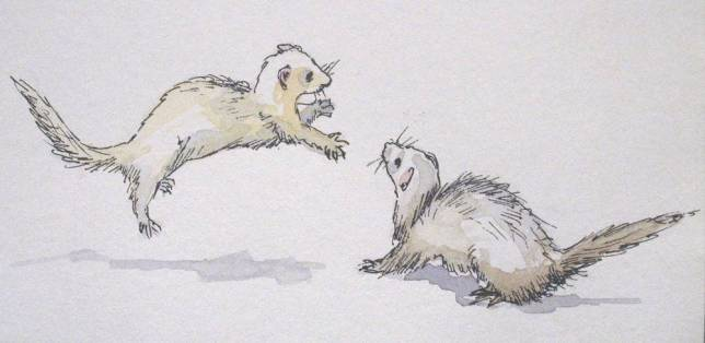 Ferret fight sketch - RIP Dark and Stormy!