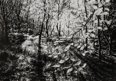"Sunlight in woodland, pen sketch, 6.5"" x 4.5"" - Original and prints available, please email me for details"